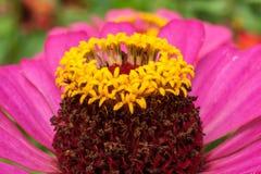 Vue détaillée des stamens de fleur, des pétales, de belles couleurs et de forme Image stock