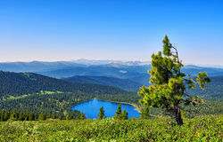 Vue d'échelle de taiga de montagne photos stock