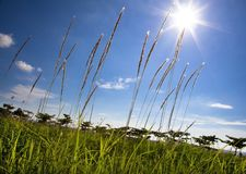 Vue d'été avec la lumière du soleil Photo libre de droits