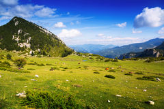 Vue d'été de pré de montagne Photographie stock