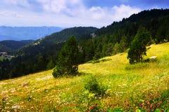 Vue d'été du pré des montagnes contre la forêt Photographie stock