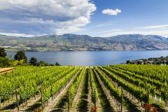Vue d'établissement vinicole d'été images stock