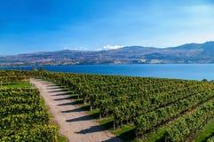 Vue d'établissement vinicole de colline de mission Photographie stock