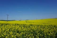 Vue d'agriculture de gisement de graine de colza, lignes électriques, paysage de ressort photos libres de droits