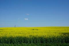 Vue d'agriculture de gisement de graine de colza, paysage de ressort images libres de droits