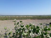 Vue d'Akra de désert photographie stock