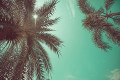 Vue d'angle de palmiers photo stock