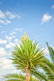 Vue d'angle faible d'arbre de yucca avec la fleur contre le ciel bleu photographie stock libre de droits