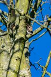 Vue d'angle faible de carolinensis gris de Sciurus d'écureuil de faune photographie stock libre de droits