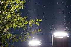 Vue d'angle faible de nuit d'été de Dushanbe Image libre de droits