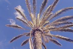 Vue d'angle faible de palmier contre le ciel bleu images stock