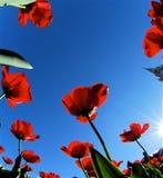 vue d'Anomalie-oeil, fleurs de dessous 5 Image stock