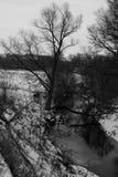 Vue d'arbre avec le fond noir et blanc Photo stock