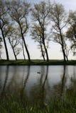Vue d'arbre de canal de Bruges Images libres de droits