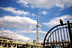 Vue d'arbre de ciel. Image libre de droits