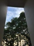 Vue d'arbre et de ciel d'un logement de HDB à Singapour Image stock