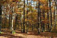 Vue d'arbres d'automne images stock