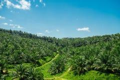 Vue d'Arial de vert la plantation d'huile de palme Photo libre de droits
