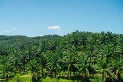 Vue d'Arial de vert la plantation d'huile de palme Photographie stock libre de droits