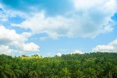 Vue d'Arial de vert la plantation d'huile de palme Images stock
