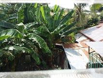 Vue d'arrière-cour Photo libre de droits