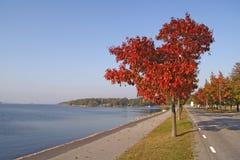 Vue d'automne Images stock