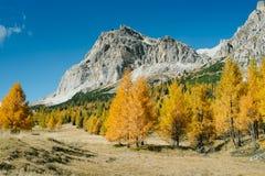Vue d'automne des dolomites Photographie stock libre de droits