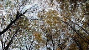 Vue d'Autumn Forest du fond à compléter clips vidéos
