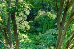 Vue d'auvent de cime d'arbre Images libres de droits
