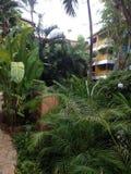 Vue d'hôtel par des palmiers photographie stock libre de droits
