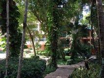 Vue d'hôtel par des palmiers photos stock