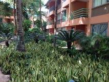 Vue d'hôtel par des palmiers photos libres de droits