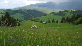 Vue d'herbe de racines de vallée de montagne avec les prés superbes Image stock