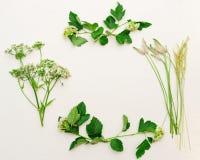 Vue d'herbe verte de champ sur le fond blanc Image stock