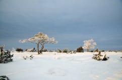 Vue d'hiver avec les arbres givrés dans un paysage simple Photos libres de droits