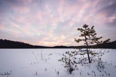 Vue d'hiver de coucher du soleil de petit pin et de lac congelé Photos stock