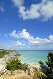 Vue d'iguanes Photo stock