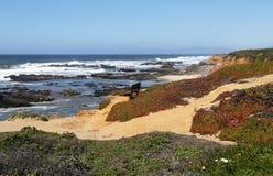 Vue d'océan Images stock
