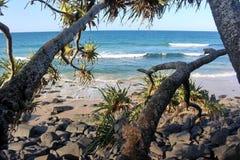 Vue d'océan des paumes de Pandanus au coucher du soleil photos stock