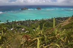 Vue d'Ocen avec des cactus de Lanikai, Oahu, Hawaï photographie stock libre de droits