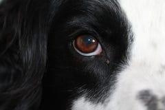 Vue d'oeil de chiens Images libres de droits
