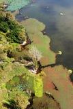Vue d'oiseau de lac Qionghai dans le ¼ ŒChina de Xichangï Photographie stock libre de droits