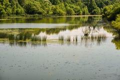 Vue d'un étang de ferme avec des roseaux Images stock