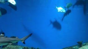 Vue d'un aquarium des grands fonds avec beaucoup de poissons, serpents, requins et anguilles de moray de flottement Fond sous-mar banque de vidéos
