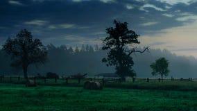 Vue d'un arbre dans le fx de matin Image libre de droits