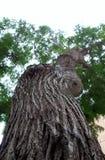 Vue d'un arbre du fond Images libres de droits