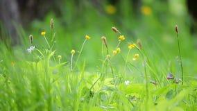 Vue d'un beau paysage, du vent soufflant sur l'herbe verte fraîche grande et des fleurs dans le pré banque de vidéos