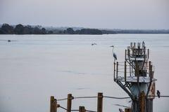 Vue d'un héron sur la rivière du Panama, Brésil photo stock