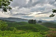 Jardin de thé indien Images stock