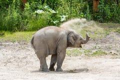 Vue d'un jeune éléphant dans un zoo Photo stock